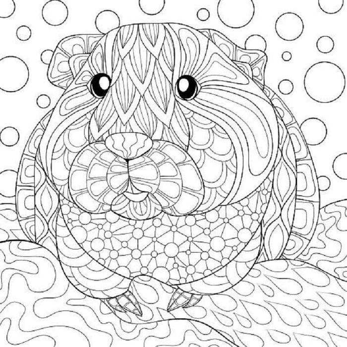 Adult Guinea Pig Coloring Pages
