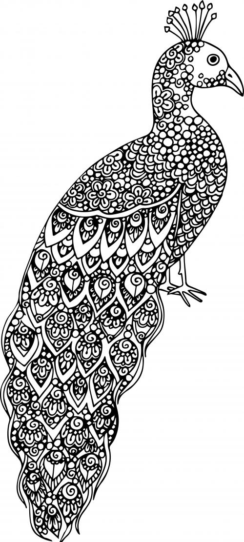 Advanced Coloring Pages Peacock