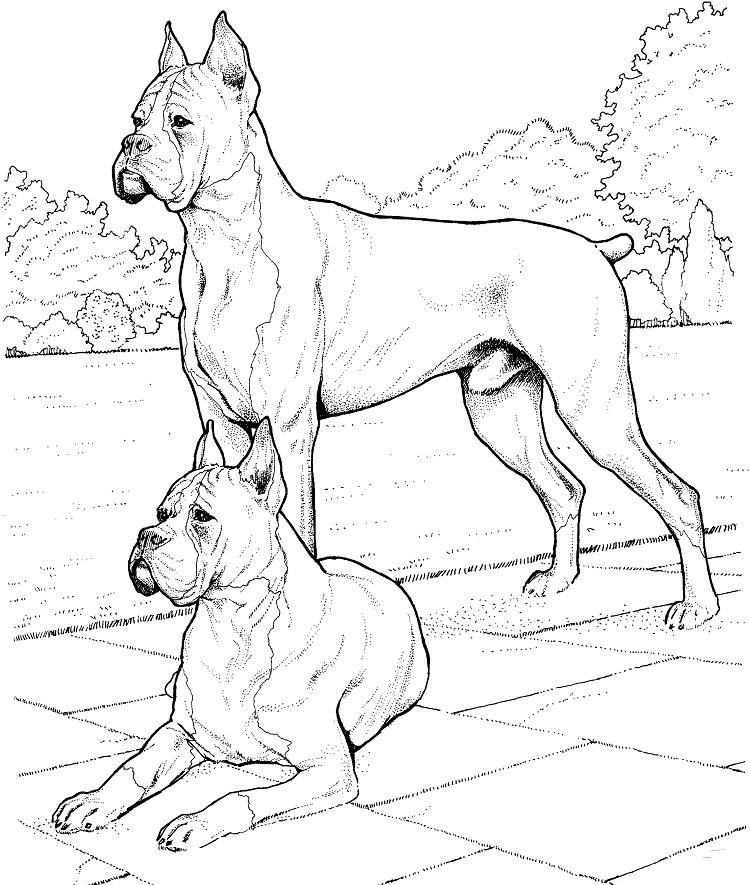 Advanced Dog Coloring Pages