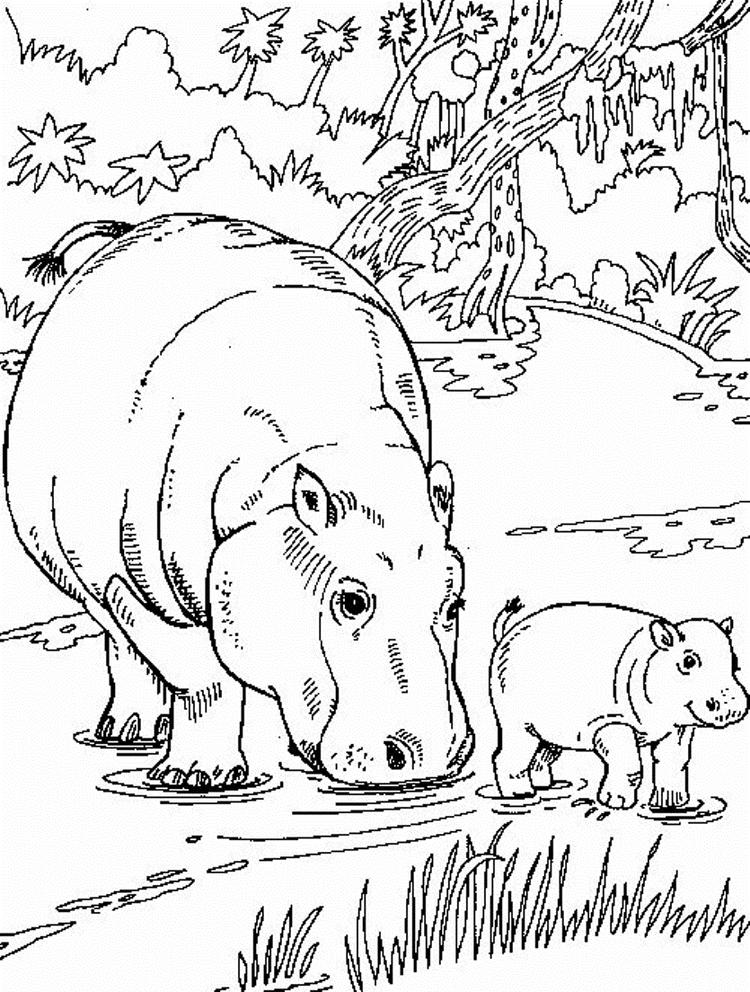 African Animal Coloring Pages Hippo Family