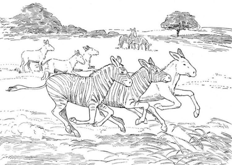 African Animal Coloring Pages Zebra