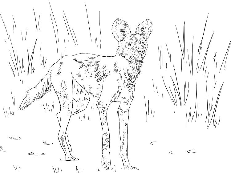 African Wild Dog Coloring Pages