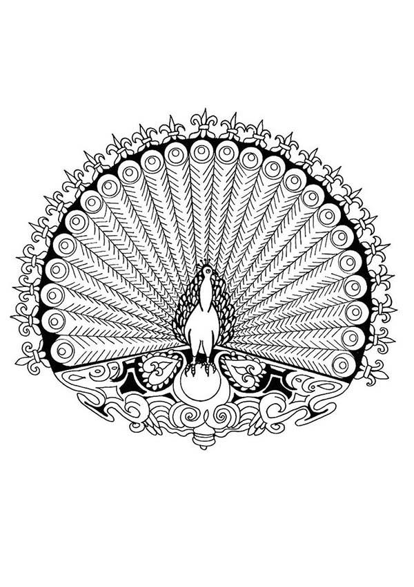 Alpha Male Peacock Mandala Animal Coloring Pages