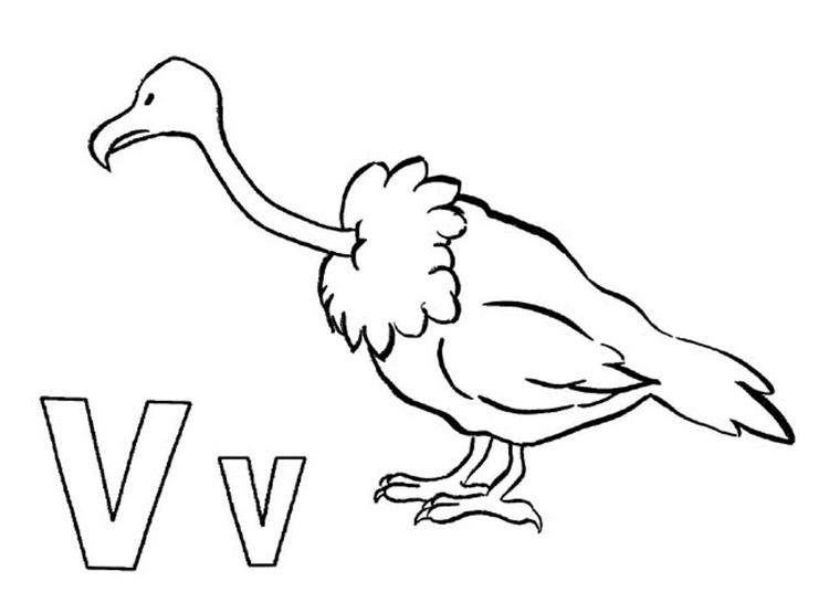 Alphabet Coloring Pages Animal Vulture