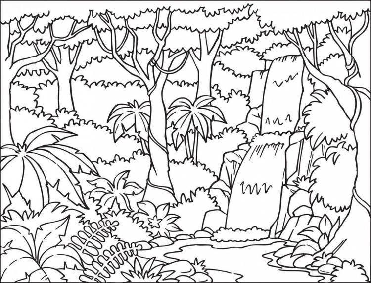 Amazon Rainforest Coloring Pages Printable