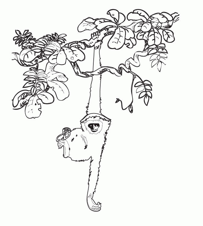 Amazon Rainforest Coloring Pages Sloth Hanging