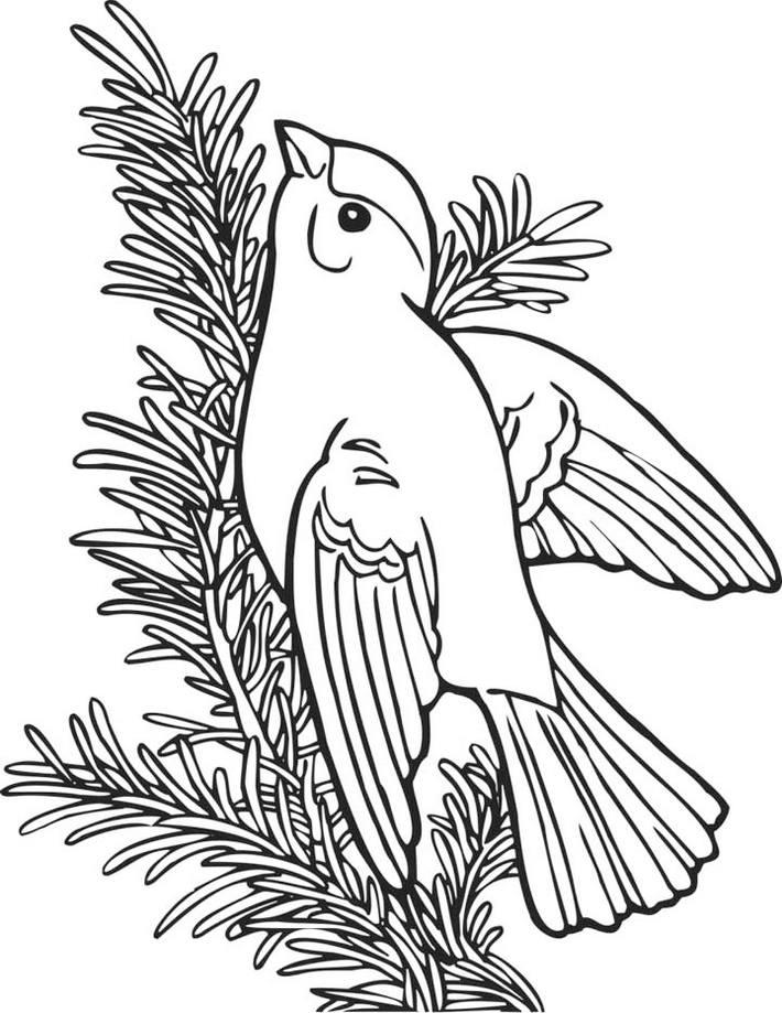 American Goldfinch Coloring Page Online