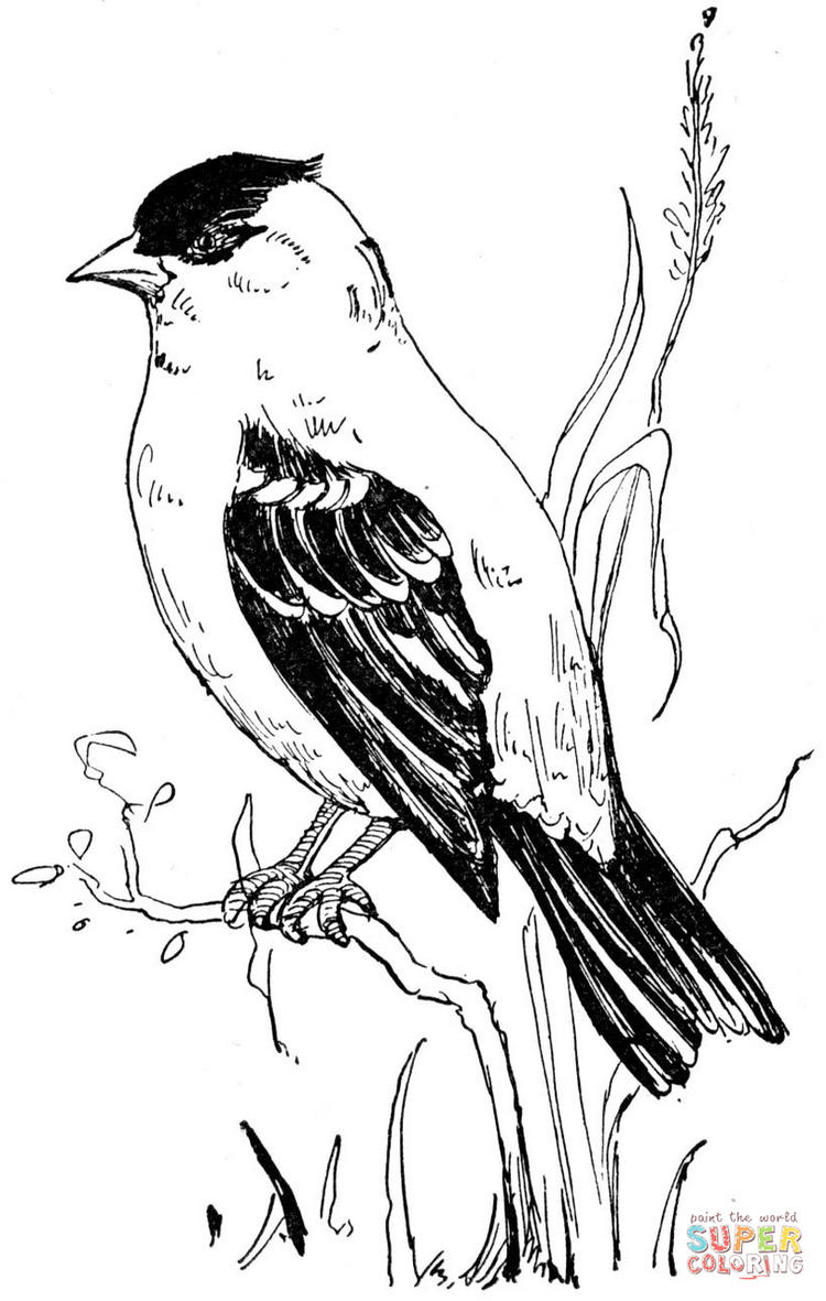 American Goldfinch Coloring Page To Print