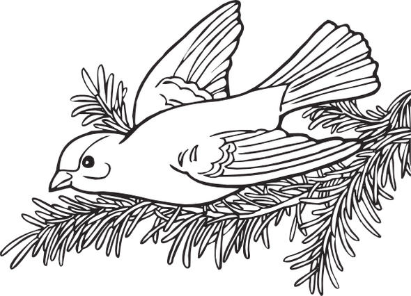 American Willow Goldfinch Coloring Page Printable