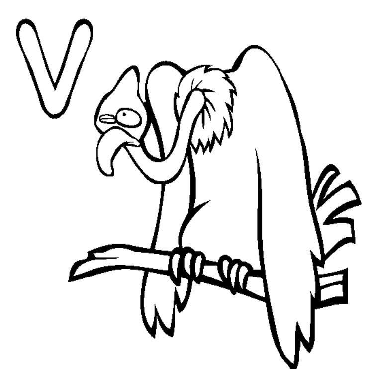 Animal Alphabet Coloring Pages Vulture