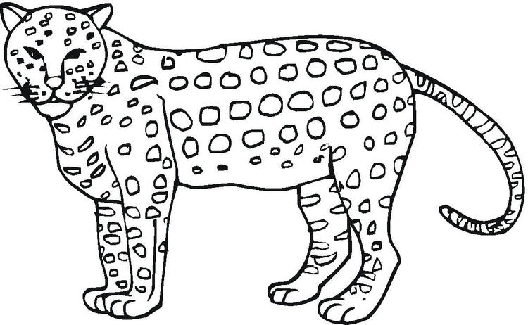 Animal Cheetah Print Out Coloring Pages