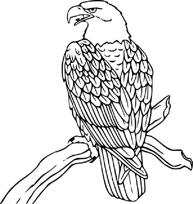 Animal Coloring Pages Eagle