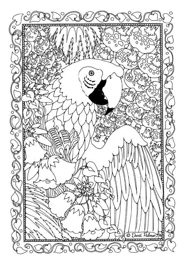Animal Coloring Pages For Adults Macaw Bird