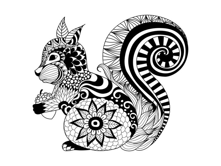 Animal Coloring Pages For Adults Squirrel