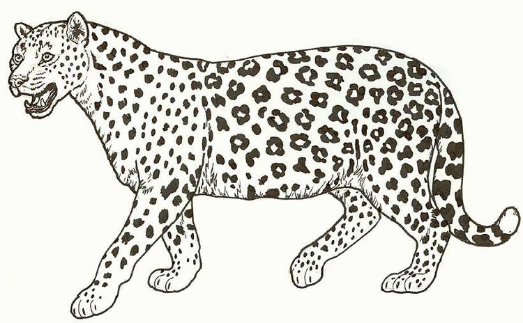 Animal Coloring Pages Of A Cheetah