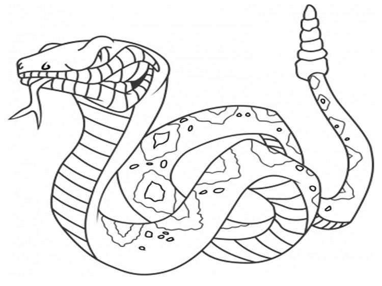 Animal Coloring Pages Snakes