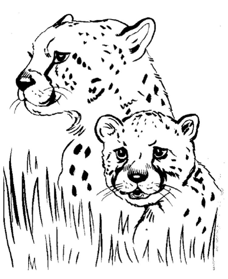 Animal Coloring Pages That Look Real