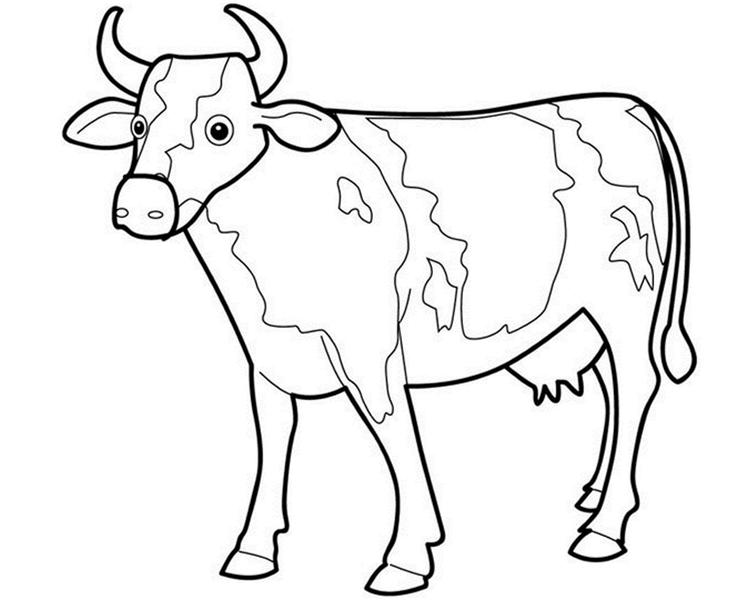 Animal Cow Coloring Pages