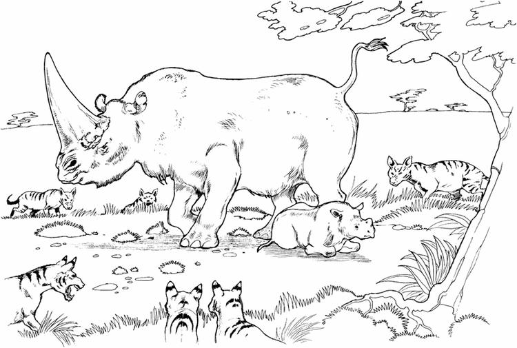 Animal Species And Habitats In The Jungle Coloring Pages