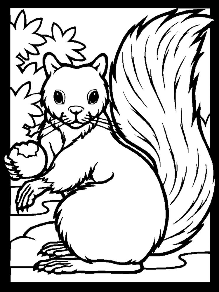 Animal Squirrel Coloring Pages