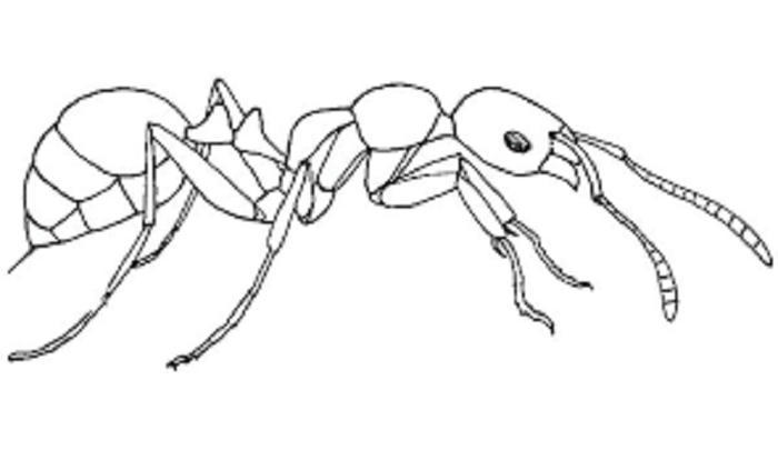 Ant Man Coloring Pages Fire Ants