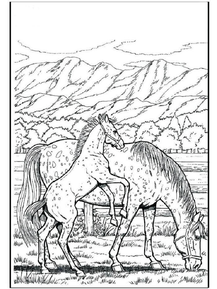 Appaloosa Horses Coloring Pages