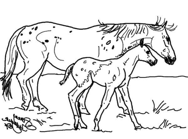 Appalooshorse And Her Baby Coloring Pages