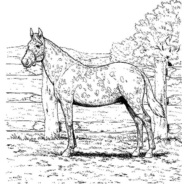 Appalooshorse Farm Coloring Pages