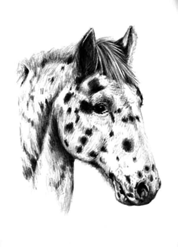 Appalooshorse Head Coloring Pages