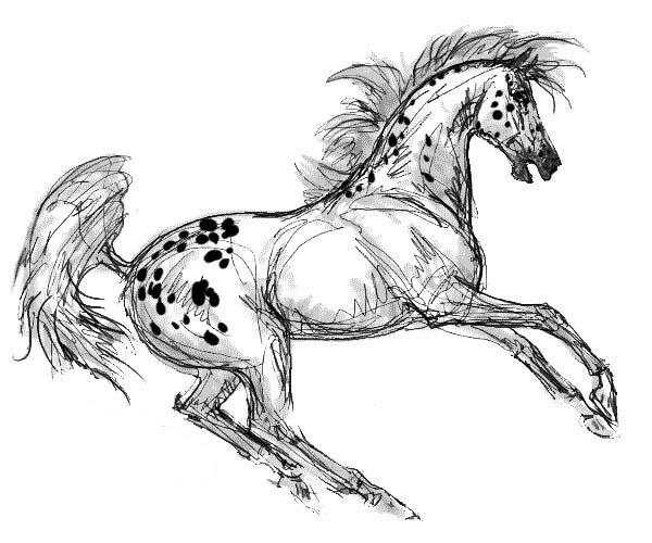 Appalooshorse Painting Coloring Pages