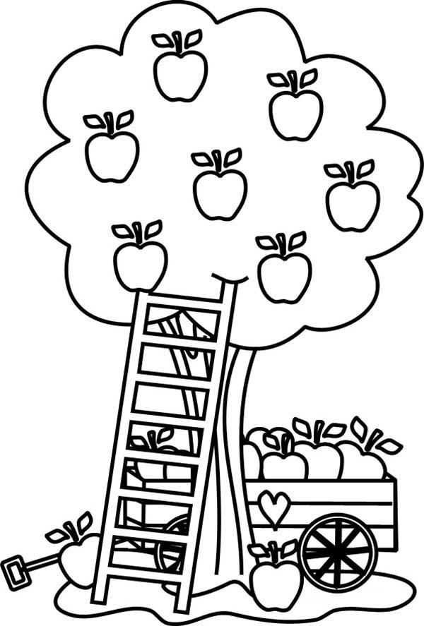 Apple Coloring Pages Apple Harvest