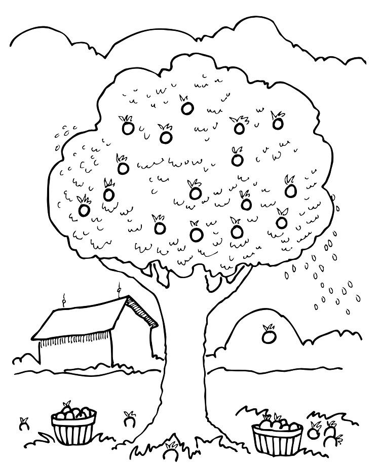 Apple Orchard Coloring Page