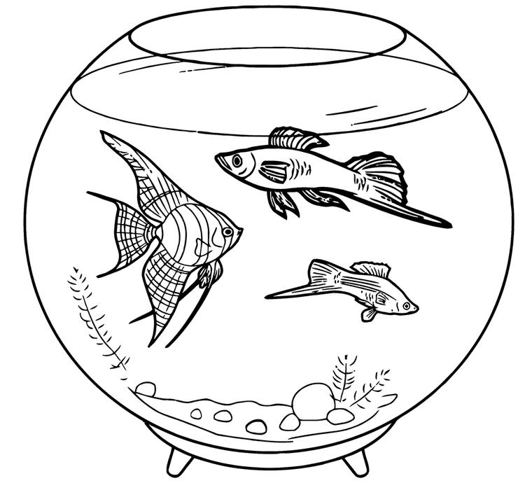 Aquarium Fish Coloring Books