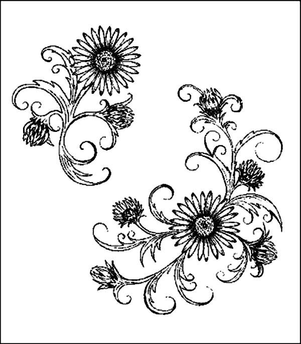 Aster Flower Deviant Art Coloring Pages