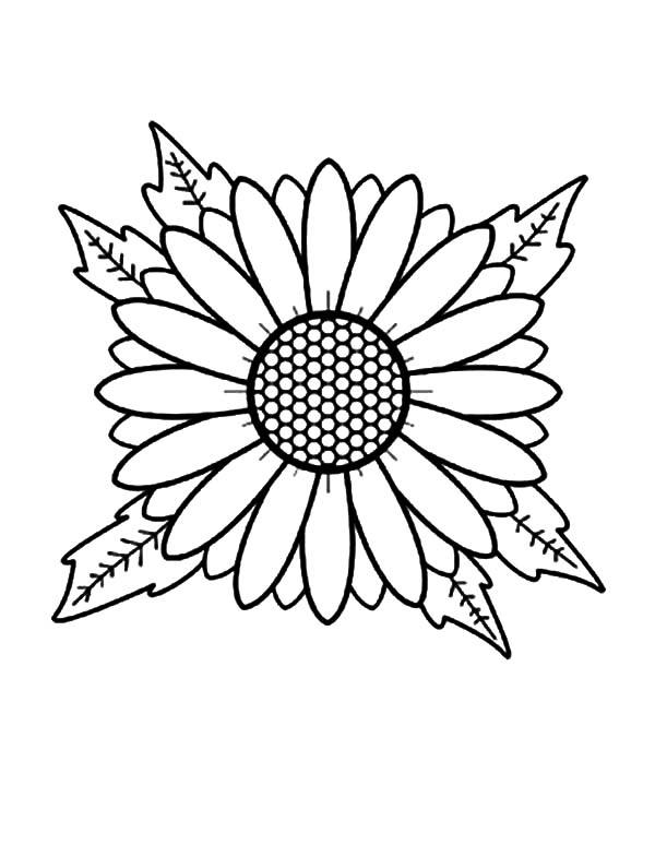 Aster Flower Head Coloring Pages