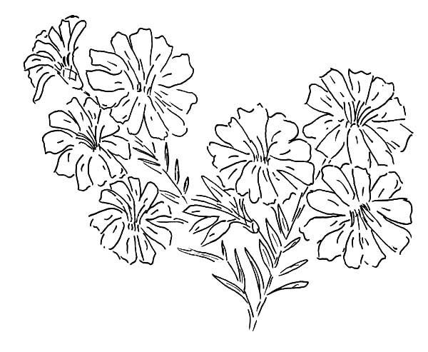 Aster Flower Painting Coloring Pages