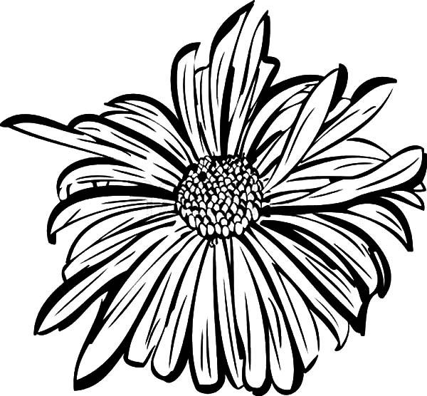 Aster Flower Petals Coloring Pages