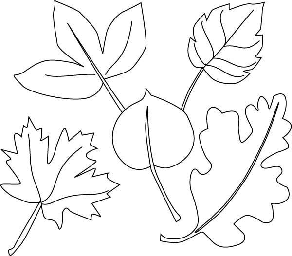 Autumn Dry Leaves Coloring Pages