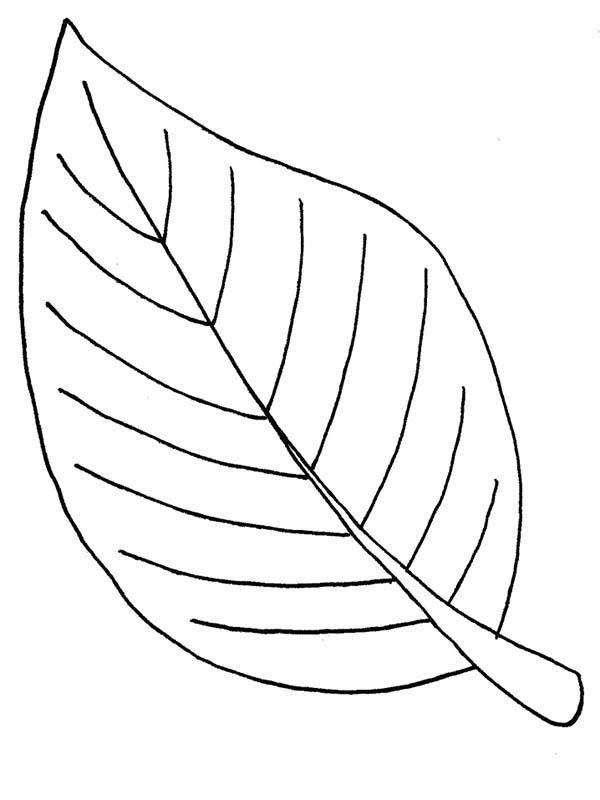 Autumn Leaves Coloring Pages For Kids