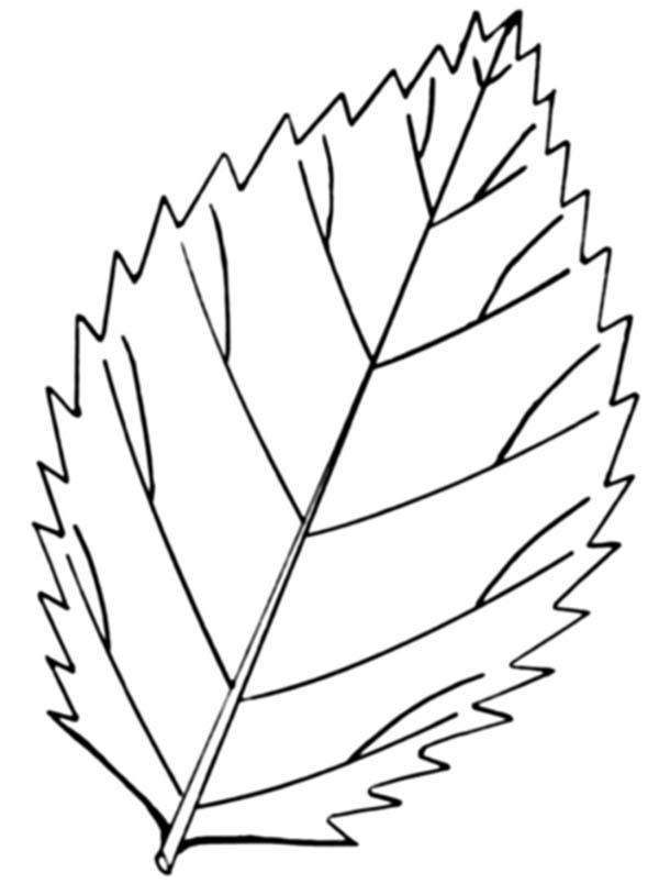 Autumn Leaves Falling Coloring Pages