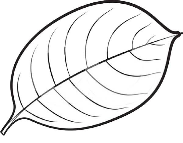 Autumn Maple Leaves Coloring Pages