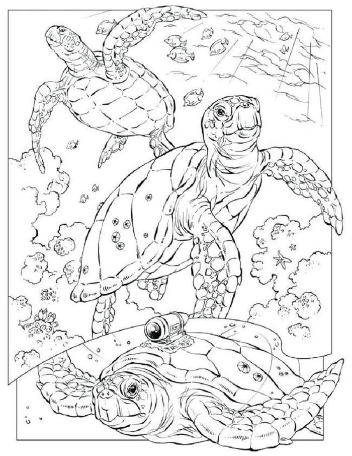 Awesome Nature Coloring Pages