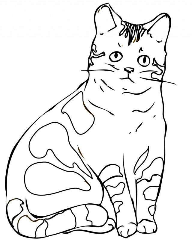 Awesome Realistic Cat Coloring Pages