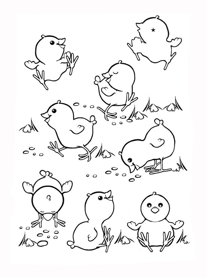 Baby Chicken Coloring Pages Cute
