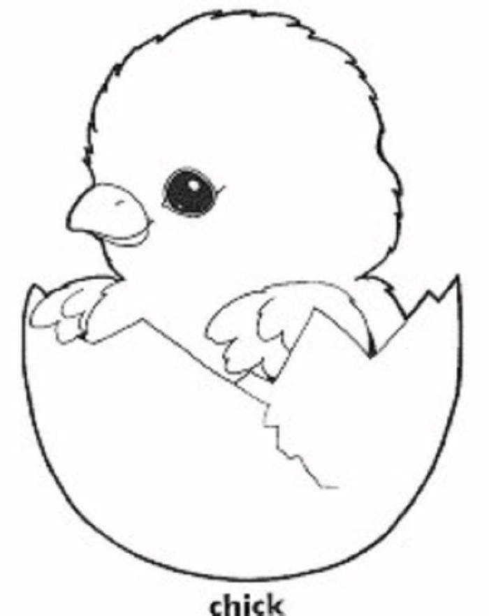 Baby Chicken Coloring Pages