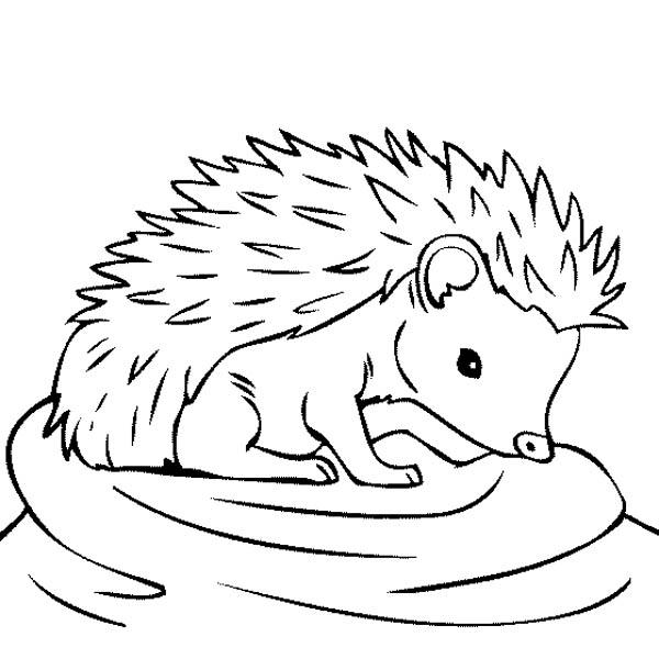 Baby Hedgehog Feeling Thirsty Coloring Pages