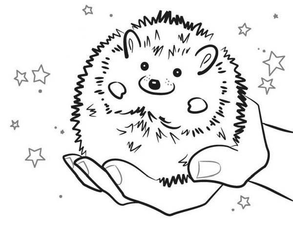 Baby Hedgehog Smiling Colouring Pages