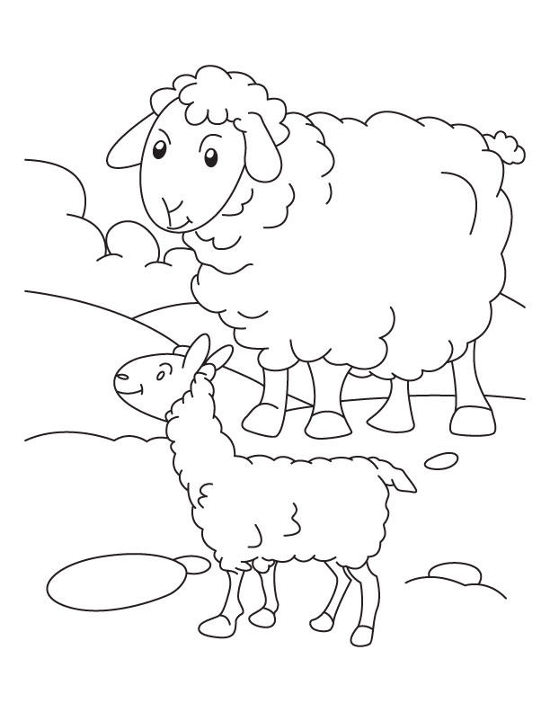 Baby Sheep And Mom Coloring Pages