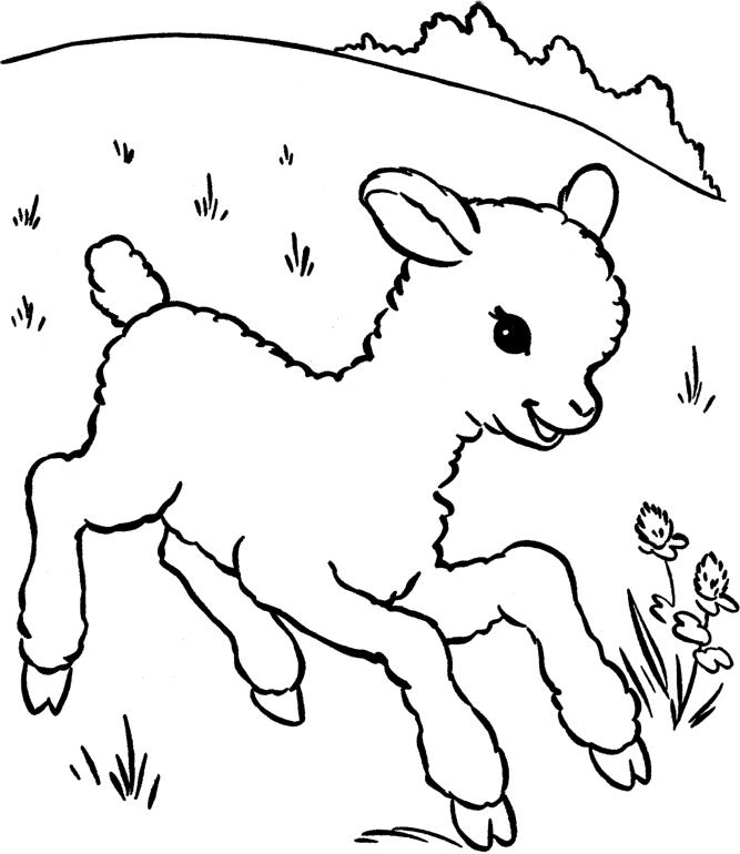 Baby Sheep Coloring Pages In Grassland