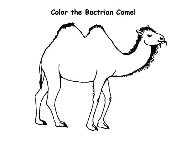 Bactria Camel Coloring Pages